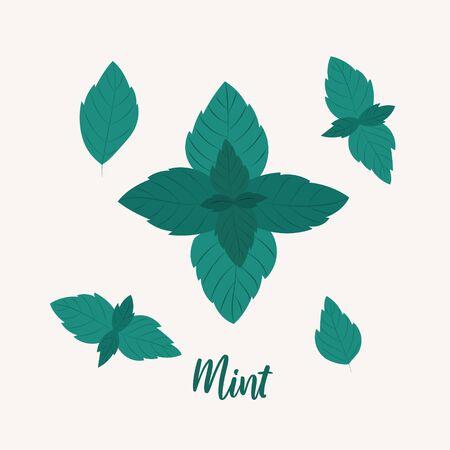 Vector illustration mint leaves. Vector leaves set