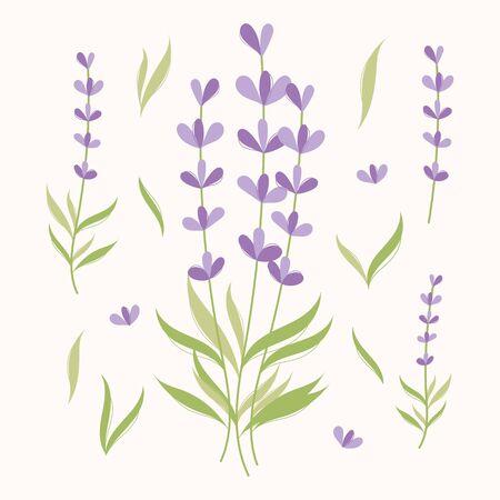 Lavender elments set. Herbs illustration  イラスト・ベクター素材
