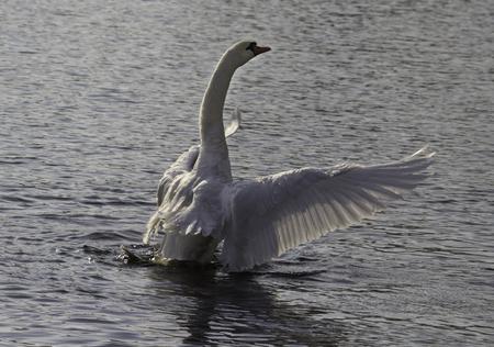 Spread wings Фото со стока
