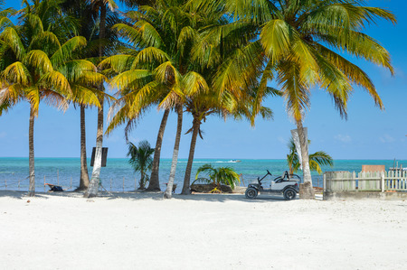 caribe: The white sand and palm trees of Caye Caulker island, Belize