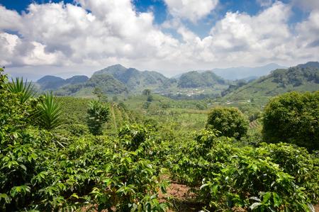 Piantagioni di caffè nelle Highlands occidentali dell'Honduras dal Parco Nazionale di Santa Barbara Archivio Fotografico - 53199755
