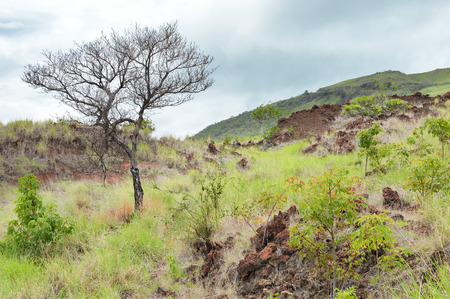 lava field: Landscape of the red lava field covered by rich vegetation, near Masaya volcano in Nicaragua