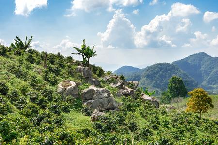 Las plantaciones de café en las tierras altas del occidente de Honduras por el Parque Nacional Santa Bárbara