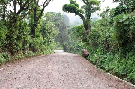 caffeinated: Path through rich highlands vegetation along the caffeinated community in Apaneca, Ruta de Las Flores itinerary, El Salvador