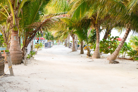 caribe: The white sand alley shaded by the palm trees by the Caribbean beach at Caye Caulker island, Belize Stock Photo