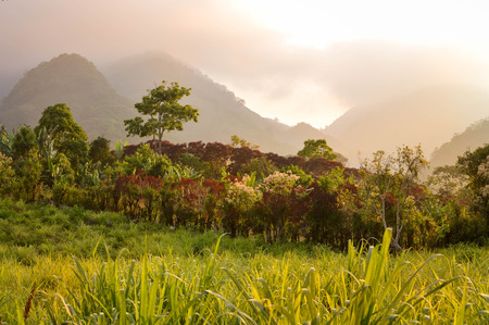 growers: Foggy landscapes surrounding the small village of coffee growers in the highlands of Honduras. Santa Barbara National Park Stock Photo