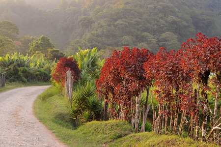 growers: Rural road through the foggy landscapes towards the cloud forests surrounding the small village of coffee growers in the highlands of Honduras. Santa Barbara National Park