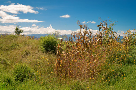 "Landscape with a corn field in Capulalpam de Mendez in the highlands of the state of Oaxaca, Mexico. It is one of the ""Pueblos Magicos"" towns."