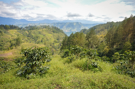Beautiful panoramic landscapes of Lake Toba and coffee plantations in North Sumatra, Indonesia