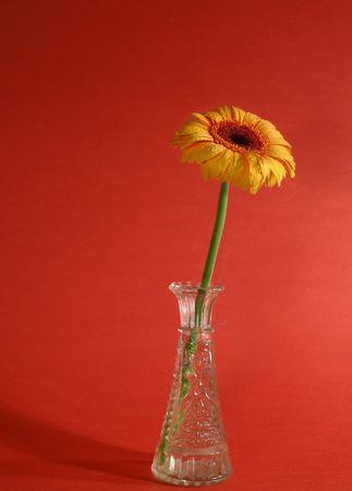 yellow gerbera in a vase Reklamní fotografie