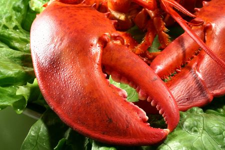 lobster claws Imagens