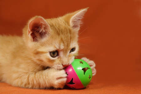 Adorable tabby kitten playing with a ball Stock Photo