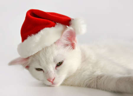 pink pussy: cute sleeping white kitten with christmas hat Stock Photo