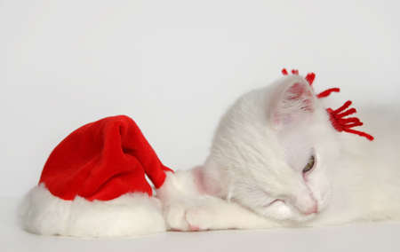 christmas pussy: cute sleeping white kitten with christmas hat Stock Photo