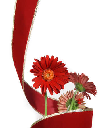 three gerbera and red ribbon isolated on white  Imagens