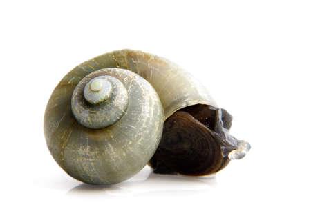 green snail isolated on white background Reklamní fotografie