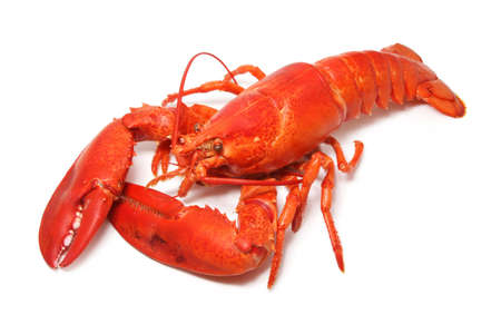 cooked red lobster isolated on white