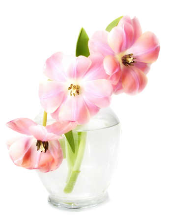 pink tulip flower with wide open petals covered of waterdrops, in glass vase Imagens