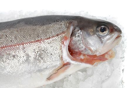 fresh trout fish on ice