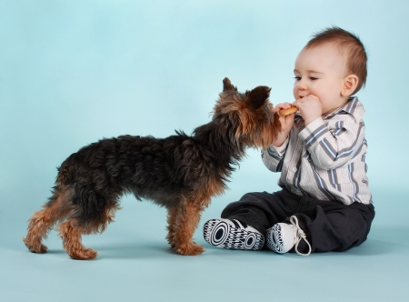baby boy and yorkie dog, blue backgound