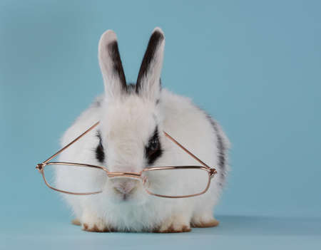 Cute young white and black rabbit wearing glasses Stok Fotoğraf