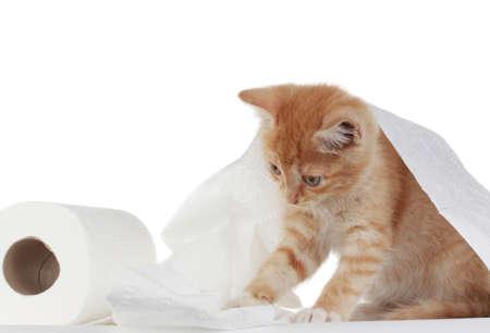 귀여운 새끼 고양이 롤 화장지 롤 스톡 콘텐츠