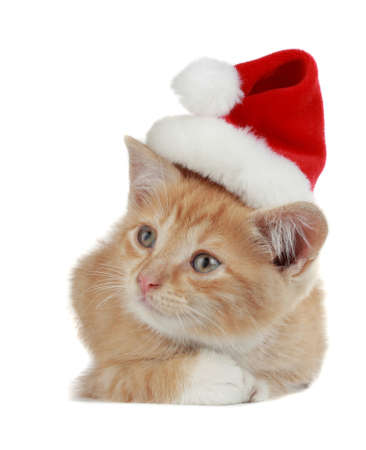 christmas pussy: cute kitten wearing Christmas hat, white background