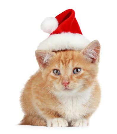 cute little kitten wearing red christmas Santa hat, isolated on white background Standard-Bild
