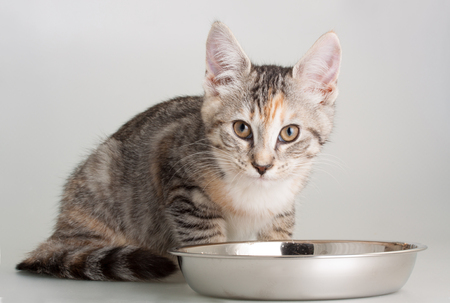 Cute kittent eating his meal in a stainless steal bowl