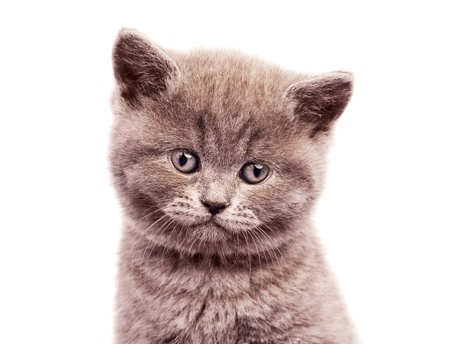 cute little kitten, isolated against white background Stock Photo - 10313793