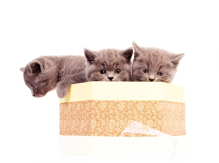 cute little kittens in the box, isolated against white background photo