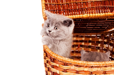 brown pussy: two cute little kittens, sitting in the basket Stock Photo