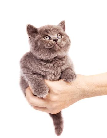 animalitos tiernos: lindo gatito sentado en la palma de la mano de un hombre y mirando hacia arriba, aislado contra el fondo blanco