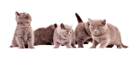 five little kittens, isolated against white background Stock Photo - 10315844