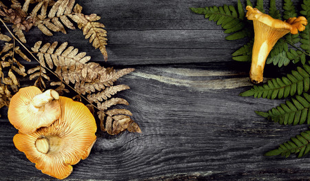 meaty: chanterelle mushrooms and grass  on the wooden background