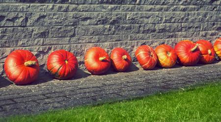harvest time: pumpkings on the floor near the house, harvest time