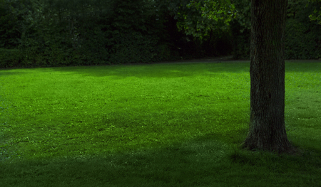 cut the grass: green summer meadow with cut grass and a tree on the right, nature background