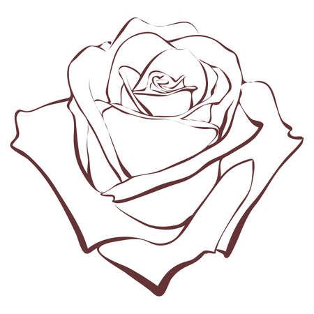 contour: One contour rose. Illustration