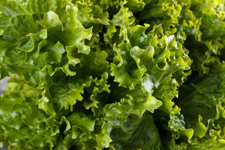 romaine: Fresh salad romaine lettuce closeup,macro