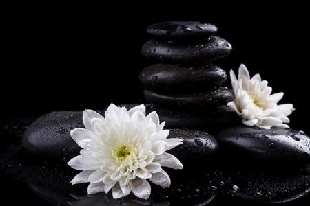 black stones: zen basalt stones and white chrysanthemum on black background