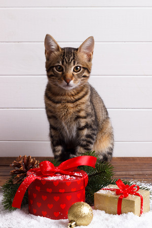 Cute small Bengal kitten and festive gift boxes on snow. holiday card template