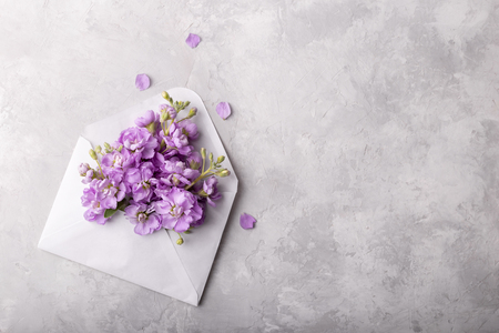 Lilac matthiola flowers in an envelope over light gray stone background, flat lay with copy space