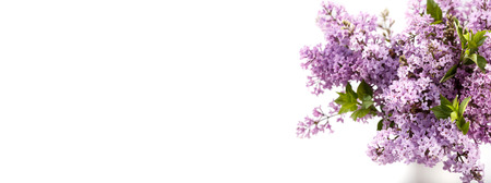 Bouquet of spring purple lilac Syringa flowers white background top view copy space Stock Photo