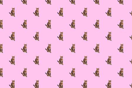 Playful Bengal kitten, four month old on pink background, seamless pattern 版權商用圖片