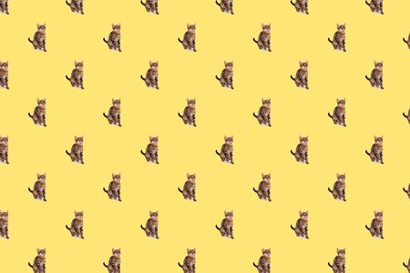 Playful Bengal kitten, four month old on yellow background, seamless pattern 版權商用圖片