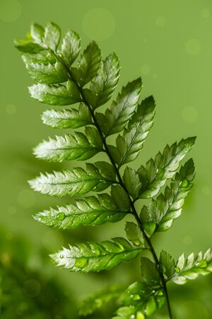 Fern house plant macro shot 版權商用圖片