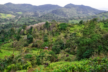 Hut in the green jungle on the mountain, Asia, East
