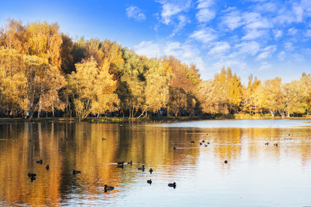 autumn forest is reflected in the lake with ducks, blue sky with clouds