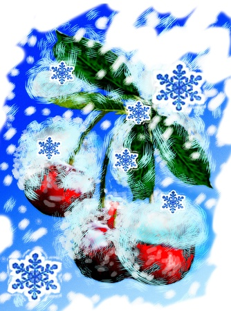 winter cherry Stock Photo - 11645554