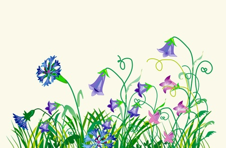Wild flowers Illustration